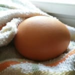 One Lone Duck Egg – Memoir