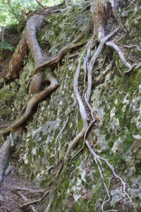 rootsonrock