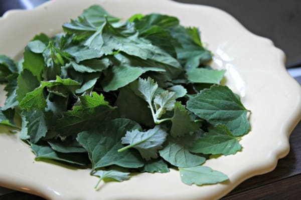 lambs quarters picked plate
