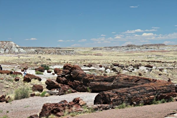 petrified wood in foreground