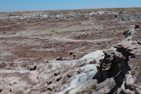 petrified wood strewn